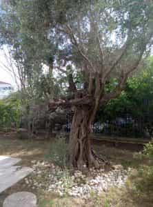 M1 tree