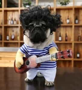 2018 11 21 13 27 35 Funny Pet Guitar Clothes With Glasses with Wig Dog Guitarist Dressing Costume Pe