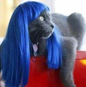 2018 11 21 13 30 12 Pet wig funny cat wig Blue Straight Hair in Dog Accessories from Home Garden