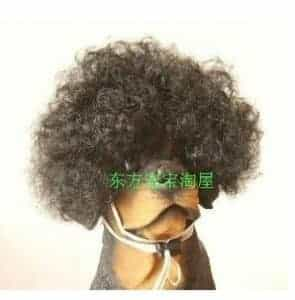 2018 11 21 13 35 50 Tangpan Short Curl Afro Style Pet Cat Dog Wig Black in Dog Caps from Home Gard
