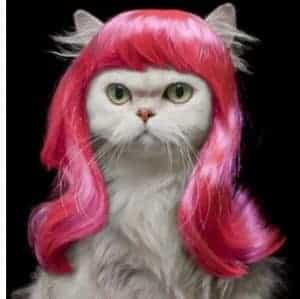 2018 11 21 13 36 49 Pet wig funny cat wig Pink Curly hair in Dog Accessories from Home Garden on