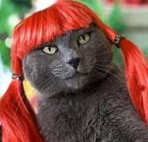 2018 11 21 14 03 50 Pet wig funny cat wig dog wig Orang Hair in Dog Caps from Home Garden on Alie