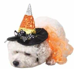 2018 11 21 16 23 19 Dog Halloween Costume Witch Wig Hat Chihuahua Dog Accessories For Small Dogs Pet