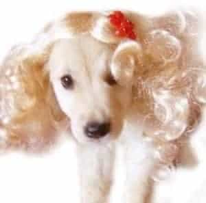 2018 11 21 16 39 15 Fancy Dress Up Short Hair Pet Curly Wigs Pet Wig Wavy Costume For DogsCats Pupp