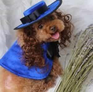 2018 11 22 10 12 14 Cat Dog Pet Cloak Costumes Wig Hat French Bulldog Cloaks Mantle Pet Puppy Produc