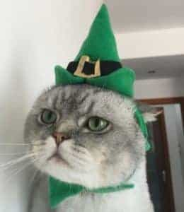 2018 11 22 11 48 15 Pet Cat Hat Halloween Christmas Mascot Costume Cat Kitten Cap Party Cosplay Outf