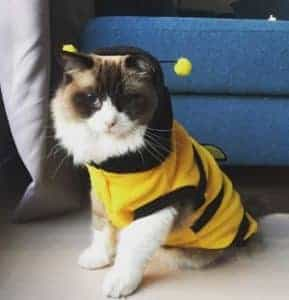 2018 11 22 11 52 17 New Promption Pet Hoodie Dog Clothes Cute Fancy Puppy Apparel Costume Cat Coat O
