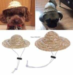 2018 11 25 09 55 40 Pet Sombrero Hat Dog Cat Hat Small Large Diameter 14cm 16cm in Dog Caps from Hom
