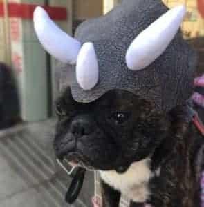 2018 11 25 09 59 48 1PC Cute Fabric Pet Hat Costume Halloween Holiday Fancy Cosplay Cap Dog Cat Bull